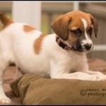 honey/puppyfinder.com